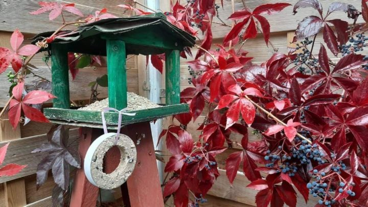 Bad Driburg. (tk) Ob Futterhäuschen oder Meisenknödel, in vielen Gärten, Balkonen und auf Terrassen sind diese Utensilien im Winter