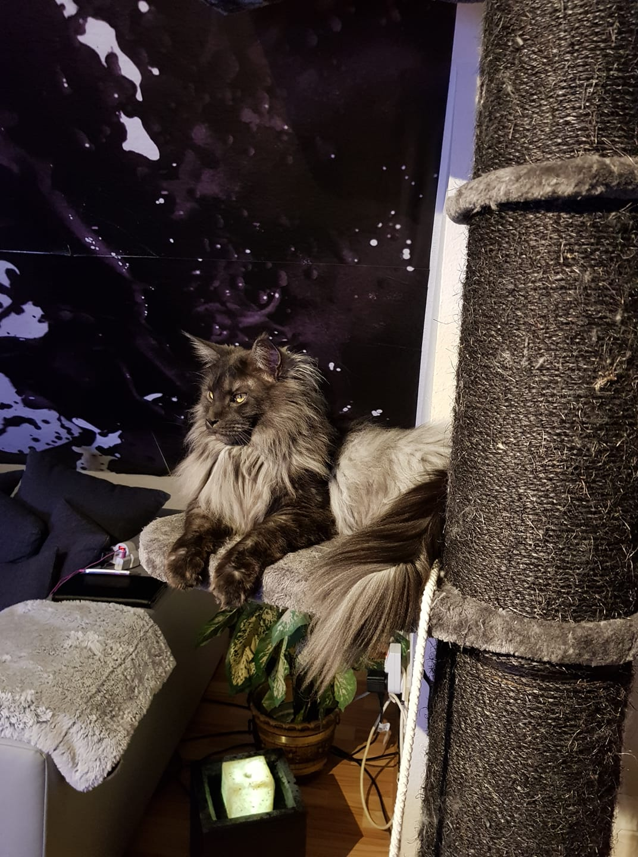 Kater Milow - Platz zwei im Ersten Bad Driburger Katzen-Contest
